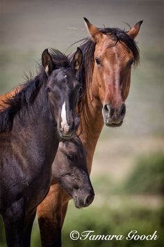 Wild-Mustangs-Photo_E4C6220 / by Tamara Gooch Photography