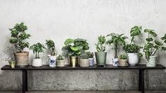 Interior design and styling for commercial and private clients. Based in Stockholm, Sweden. Green Decor, House Plants Indoor, Container Plants, Plant Projects, Plant Goals, Plant Decor Indoor, Garden Games, Plant Decor, Plant Life