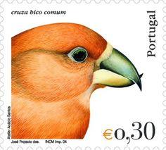Cruza Bico comum ~~  O cruza-bico-comum é uma ave da família Fringillidae. A sua característica mais marcante é o bico, cujas mandíbulas se cruzam na extremidade, permitindo-lhe abrir pinhas, para extrair as sementes do seu interior.