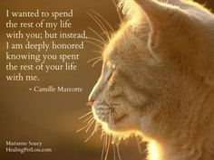Cat Quotes, Animal Quotes, Dog Cat, Animals And Pets, Funny Animals, Cat Poems, Pet Loss Grief, Pet Remembrance, Animals