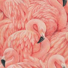 Flamingos Pink wallpaper by Albany