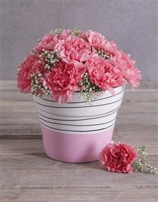 gifts: Bubblegum Pink Carnation in a Pink Pot! Pink Happy Birthday, Happy Birthday Candles, Heart Balloons, Helium Balloons, 18 Candles, Womens Day Gift Ideas, Unicorn Balloon, Lucky To Have You, Pink Carnations