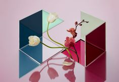Nik Mirus Camille Boyer Art direction Photography Still life Flowers Magazine Decline Colorful Blue White Pink Transparency Reflexion Square Plexi Acrylique Red Bull, Reflection Art, Thing 1, Japanese Graphic Design, Vase, Still Life Photography, Art Director, Plexus Products, Line Art