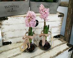 Jarra de vidro com jacintos