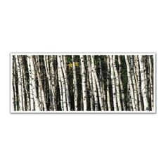 JP London PAN5113 uStrip Birch Tree Nature Forest High Resolution Peel and Stick Removable Wall Mural