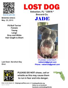 Lost Dog - Pit Bull Terrier - Sebastian, FL, United States