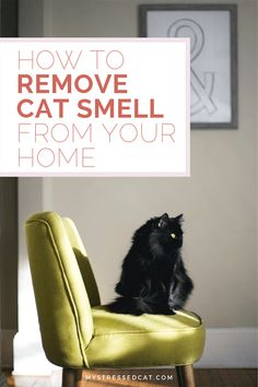 Feeling overwhelmed by the amount of cat hair your cat sheds? Learn simple tips to clean your home and combat cat hair. Remove Cat Urine Smell, Cat Pee Smell, Cat Urine Smells, Pet Urine, Pet Odors, Urine Odor, Home Design, House Smell Good, Living With Cats