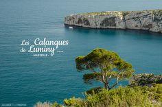 20130501 Luminy 198 Il fait beau, pas trop chaud : découvrez les Calanques de Luminy à Marseille