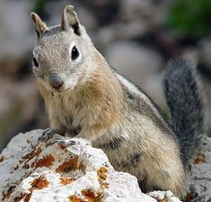Google Image Result for http://www.about-squirrels.com/graphics/squirrel-hp.jpg