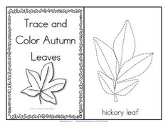 FREE  This is a booklet to make, featuring leaves from some deciduous trees in North America. Trace the leaves, color them with Fall colors, talk about the types of trees in your neighborhood that are losing their leaves.5 pages.