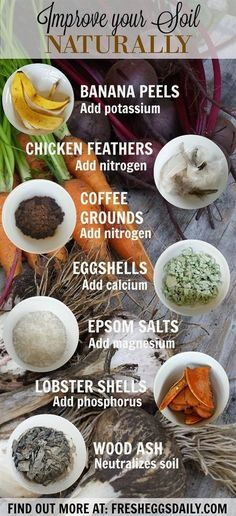 Instead of using commercial fertilizers and plant food, why not use some scraps from your kitchen that would otherwise end up in the trash or compost bin to amend and improve your garden soil naturally? #GardeningTips #gardensoilnature