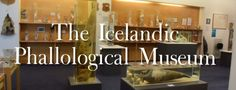 Iceland's Penis Museum (The Icelandic Phallological Museum) - Mags On The Move Iceland Museum, The Places Youll Go, Places To Go, Northern Lights Trips, Travel Around Europe, Iceland Travel, Disney Cruise, Travel Inspiration, Museums