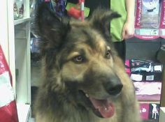 Mamut Manrubia #veterinario www.veterinario.es