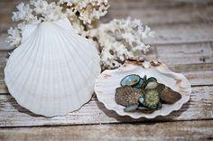 Cereus Art -- seashell craft supplies