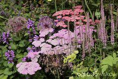Rabaty angielskie - strona 20 - Forum ogrodnicze - Ogrodowisko