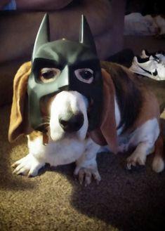 I'm Batdog