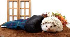 ゆったり入れてあったかい、冬用寝袋のMサイズです。http://unibo.theshop.jp/categories/291355 #ハリネズミ #小動物 #寝袋 #ペット #ペットグッズ #ペット用品 #Hedgehog #Pet #PetSupplies #Animal #SmallAnimal