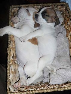 Twitter / EmergencyPuppy: Puppies, napping in a basket. ...
