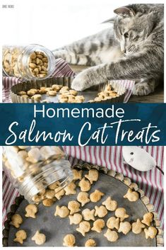 3 Ingredient Salmon Cat Treats Homemade cat treats are a fun way to show your cats how much you love them! This fish-shaped 3 ingredient salmon cat treat recipe will be a hit with your cat babies. Featured in Family Circle. via Cookie Ro Healthy Cat Food, Dry Cat Food, Pet Food, Salmon Cat, Homemade Cat Food, Cat Care Tips, Pet Tips, Dog Care, Pet Treats