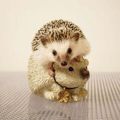 おはぎも鉢に入ってみました。 #hedgie #hedgehog #ハリネズミ #はりねずみ #hérisson #pet #おはぎ