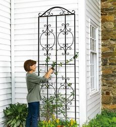 Burnished Bronze Finished Iron Montebello Tall Trellis
