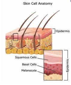 Skin Cancer Breakdown - Skin Wellness