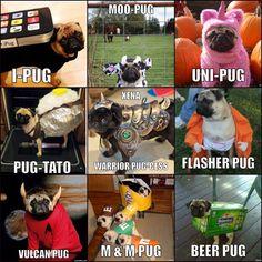 Pugs no futuro Pug Photos, Pug Pictures, Pug Pics, Pugs In Costume, Pet Costumes, Costume Ideas, Baby Animals, Funny Animals, Cute Animals