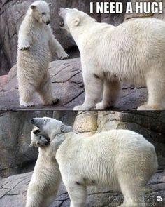 so  niedlich  ist das nicht  ein  super  bild ? was meint ihr ? #tierbilder