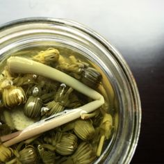 Dandelion capers- what a neat idea! Dandelion Capers// Forager Chef