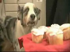 Cupcake Dog.  I cannot not laugh at this.