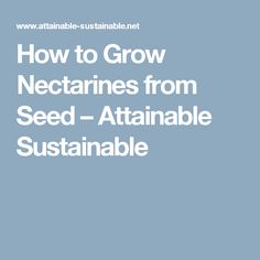 How to Grow Nectarines from Seed – Attainable Sustainable