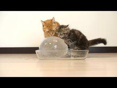 Estos gatitos descubren una pelota gigante de hielo, lo siguiente que hacen…