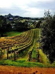 Image result for waiheke vineyards