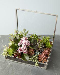 DIY | Jewelry Box Succulent Garden