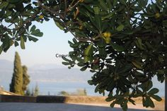 Writers And Poets, Lake Garda, Italy, Plants, Life, Italia, Flora, Plant