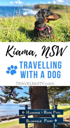 For a fabulous dog-friendly getaway close to Sydney, head down the coast to the dog-friendly towns of Kiama and Gerringong.