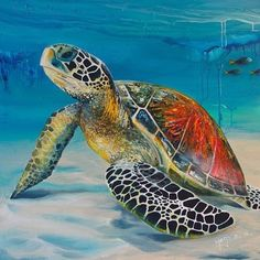 A Little Rest by Mago'z Sea Turtle Images, Sea Turtle Pictures, Sea Turtle Art, Turtle Love, Green Turtle, Beautiful Sea Creatures, Animals Beautiful, Cute Animals, Underwater Animals