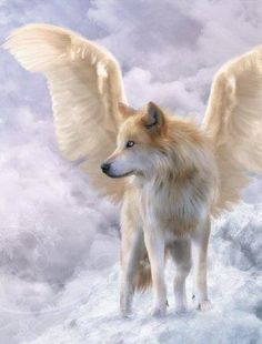 Dogs With Angel Wings Dogs angels wings wolf Wolf Love, Beautiful Creatures, Animals Beautiful, Cute Animals, Fantasy Wolf, Fantasy Art, Fantasy Creatures, Mythical Creatures, Schnee Tattoo