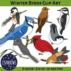 Not all birds fly south for the winter, in fact, some birds, like the Dark-eyed junco, fly down from colder climates. Winter Birds Clip Art is a collection of a few birds that you can find in the Midwest during the winter months.This clip art set contains 8 images in both full color and black and white line art, 16 files total.