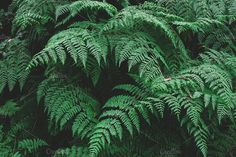 Lush ferns by Rene Jordaan Photography on Nature Photos, My Photos, Stock Photos, Slytherin Aesthetic, Beautiful Forest, Photography For Sale, Business Illustration, Lush Green, Ferns