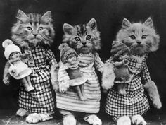 Kittens with dolls by Harry Whittier Frees