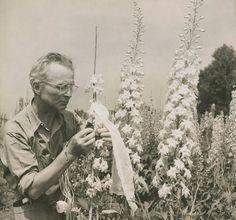 Edward Steichen with delphiniums (c. 1938) at his farm, Umpawaug House (Redding, Connecticut)  #starpower reynoldahouse.org