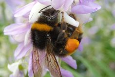 Researchers discover that bumblebees feed on less nutritious flowers after being exposed to small amounts of a neonicotinoid insecticide.