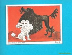 CORDED POODLE AND MINIATURE POODLE GERMAN TOBACCO CARD BERGMANN 1932