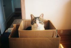 Cat in a box in a box / carol baier