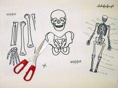 Szkielet człowieka – gigantyczne puzzle do druku.