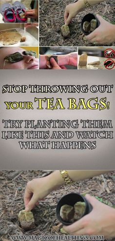 Stop throwing out your tea bags! Try planting them like this and watch what happens
