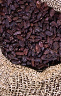 cacao (cocoa) beans in yute sacks, Rio Caribe, Venezuela