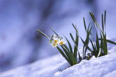Be in the spring light by Masaru Kuroda on 500px