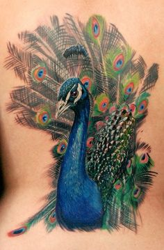 Peacock Tattoo ok already have 3 tatoo's if i could take all the pain this one would give I'd get this but Commie you did give me an ieas for a new one a Peacock feather first i had to get Michael's name done have John but in Italian. on my list.